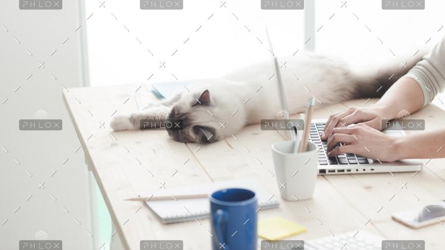 sleepy-cat-on-a-desktop-P4C6THM